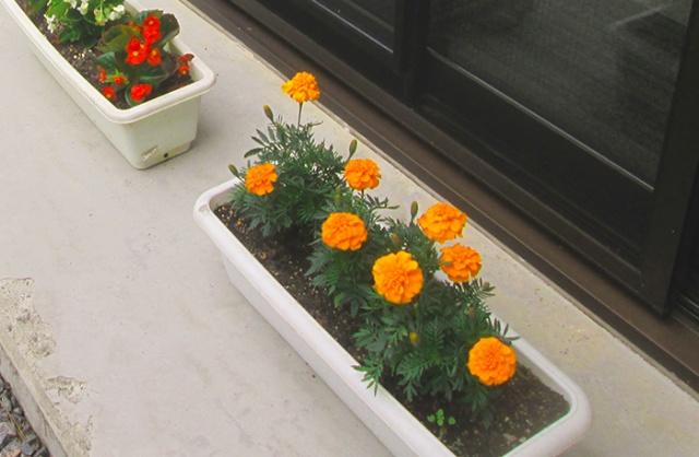 ボランティア団体「みどりの会」様からお花の贈り物